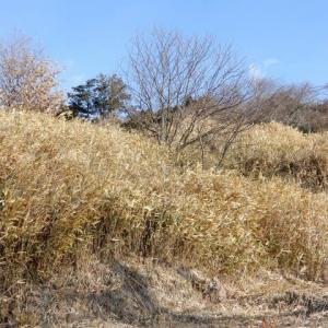 元棚田は茶草場