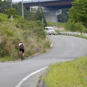 新緑の小道