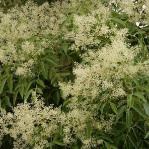 潮海寺 夏の花