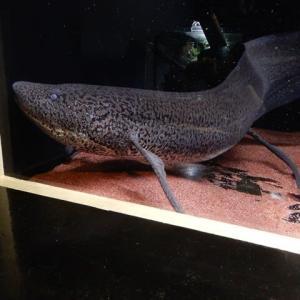 改めて 竹島水族館