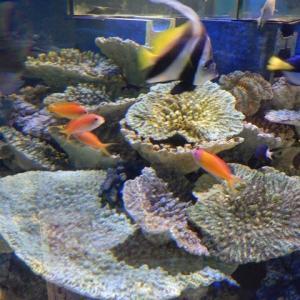 竹島水族館 オシャレな生物達