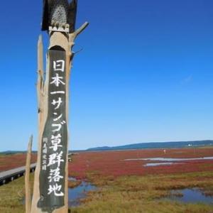 サロマ湖の旅 晴れた日のサンゴ草 スマホから・・・