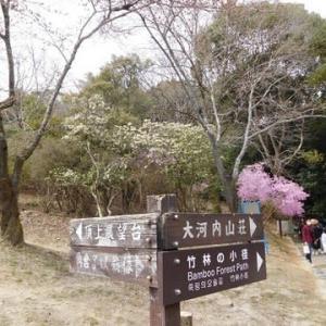 京都の旅 嵐山公園・・・