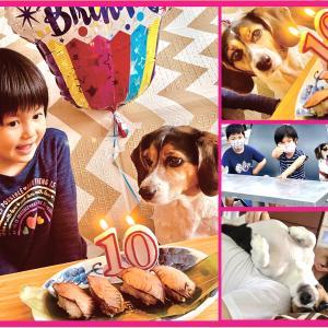 相棒、10歳誕生日。