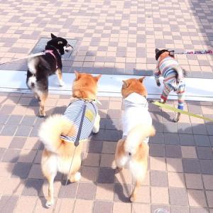 遠征!!大阪ランチ&お散歩♪