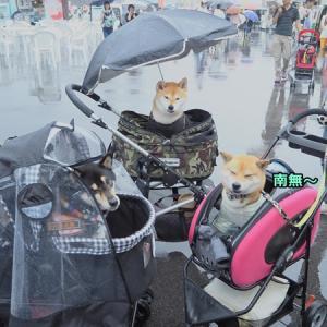 雨のわんだらけ(;・∀・)