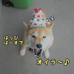 Happy 5th Birthday\(^o^)/