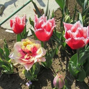木々は芽吹き、百花繚乱の春を迎えたが・・・