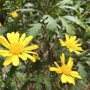 彼岸花の出番です#彼岸花#あまの街道の花 #n花の写真