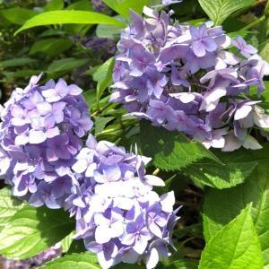 大阪長居植物園