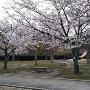 庄境公園の桜 満開