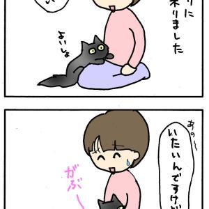怒ってる?猫とロシアン!!