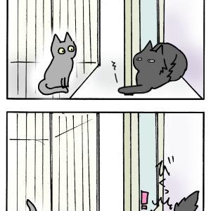 ちょっかい猫とロシアン!!