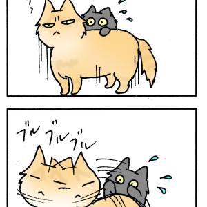 大きい猫の力業