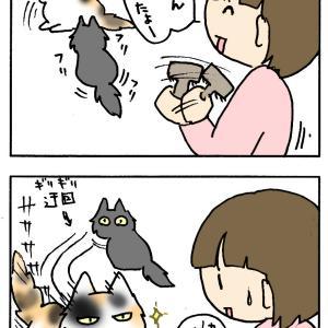 みゆ〜毛玉とるよ