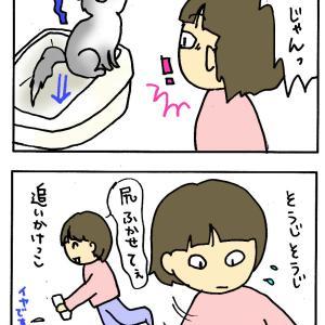 ノアちゃんピーー