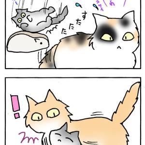 姉さん猫とノア