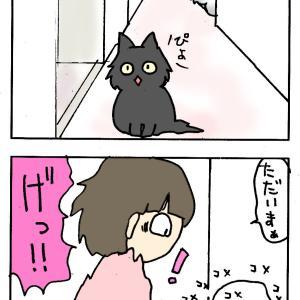 いたずら猫のコンビ結成
