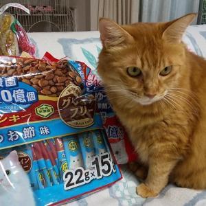 独占猫とテロテロコンビ猫