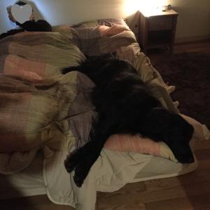 幸せ睡眠タイム