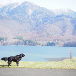 GWの湖畔散歩