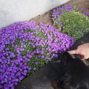 花とあんことお友達