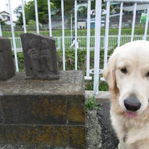 もし飼うなら大型犬?小型犬?
