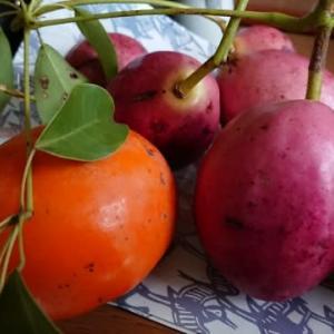 柿とグベと菊の花