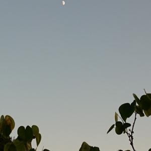 今日の空~1日庭遊びでした(^^ゞ