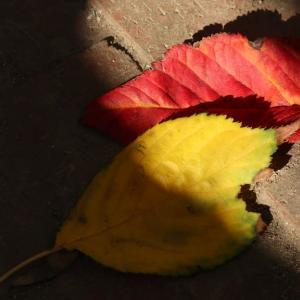 落ち葉のデュエット