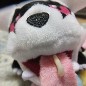 歯と目 (記録用)