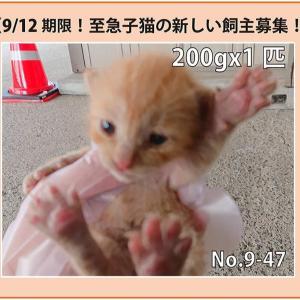 9/12期限!子猫の新しい飼い主さん募集!!