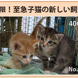 9/17期限!子猫の新しい飼い主さん募集!!