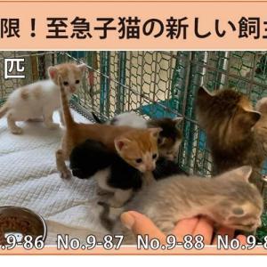 9/19期限!子猫の新しい飼い主さん募集!!