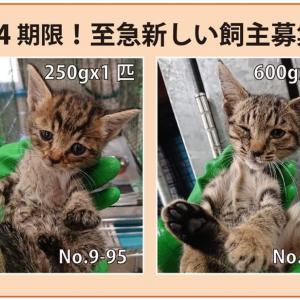 9/24期限!子猫の新しい飼い主さん募集!!