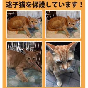 《野口さんより》松山市北持田にて迷子猫を保護しています!