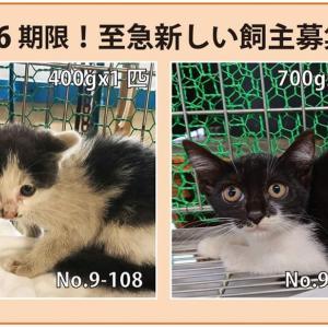 9/26期限!子猫の新しい飼い主さん募集!!