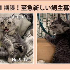 10/1期限!子猫の新しい飼い主さん募集!!