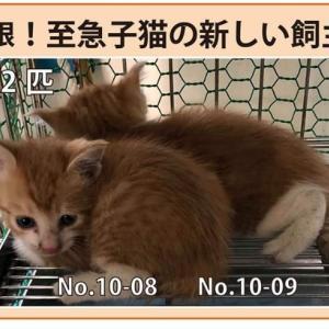 10/8期限!子猫の新しい飼い主さん募集!!