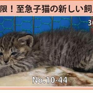 10/15期限!子猫の新しい飼い主さん募集!!