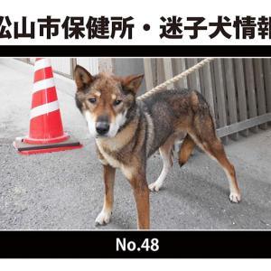 松山市保健所・迷子犬情報!*No.48古三津付近