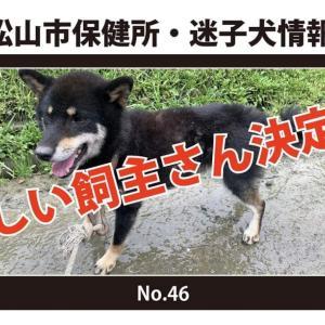 新しい飼い主さん決定!*No.46柴犬