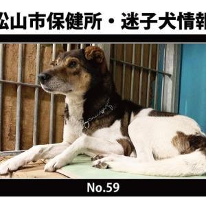 松山市保健所・迷子犬情報!*No.59雑種犬