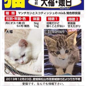 《熊本さんより》迷子猫2匹をさがしています!