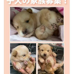 松山市保健所・迷子犬情報!*雑種子犬