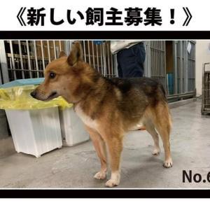 1/23(木)期限!No.63雑種犬新しい飼い主さん募集!!