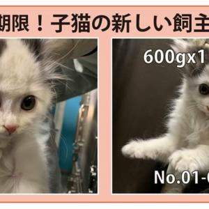 1/28期限!子猫新しい飼い主さん募集!!