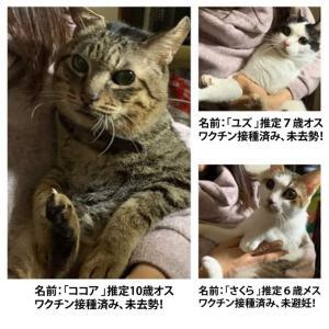 3匹の成猫新しい家族を募集いたします!