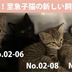 03/03期限!子猫4匹の新しい飼い主さん募集!!