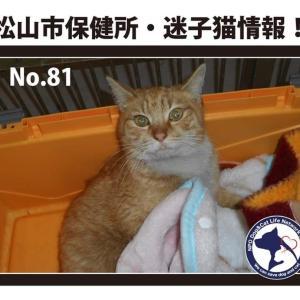 松山市保健所・迷子猫情報!*No.81負傷猫 久万ノ台付近